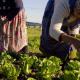 Women working in a small farm garden in Cape Town
